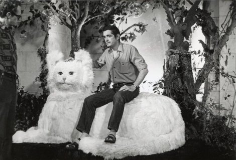 Demy trône chat
