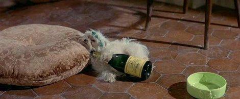 Le chien d'Irma.